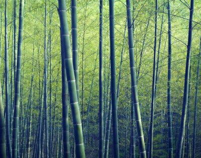 Wall mural Bamboo Forest Trees Nature Concepts