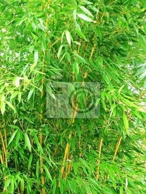 bamboo green  foliage