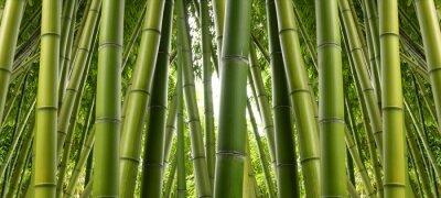 Wall mural Bamboo Jungle