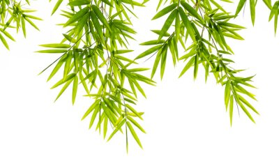 Wall mural bamboo leaves isolated on white background