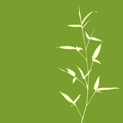 Wall mural Bamboo Silhouette on Green Background