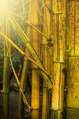 Wall mural Bamboo trees