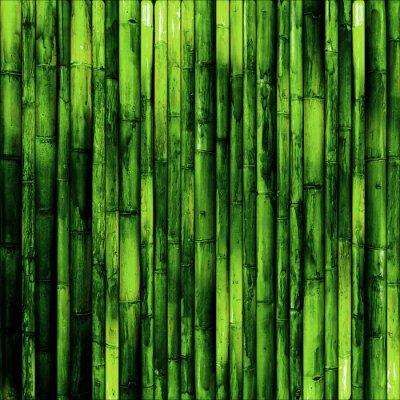 Wall mural Bamboo wall