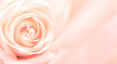 Wall mural Banner with pink rose