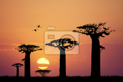 Wall mural baobab silhouette at sunset