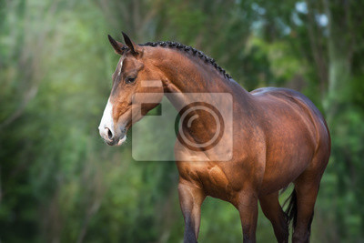 Bay Horse close up portrait in motion against green background