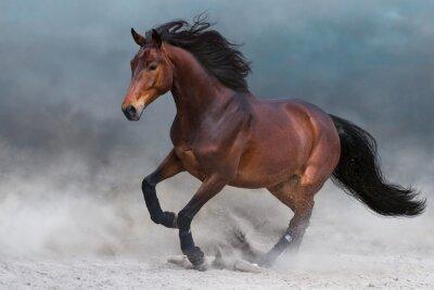 Wall mural Bay horse in dust run fast against blue sky