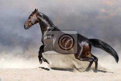 Bay horse in motion in desert dust