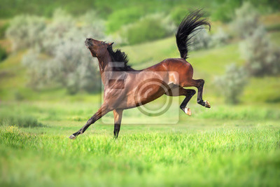 Wall mural Bay horse in motion on on green grass