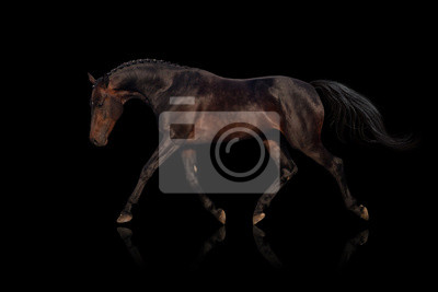 Wall mural Bay horse isolated on black background