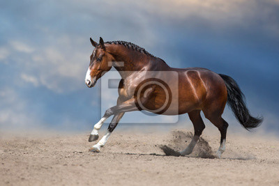 Wall mural Bay horse run gallop on desert sand against blue sky