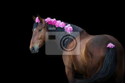 Bay horse with pink pions in mane on black background