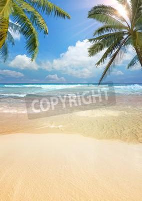 Wall mural Beach palm