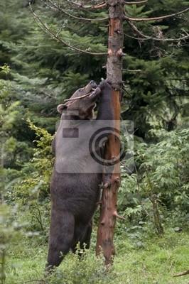 Bear marked upright