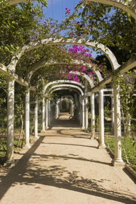 Wall mural Beautiful Arched Pergola Infinite Path in Botanical Garden, Rio de Janeiro, Brazil