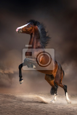Beautiful bay stallion rearing up in desert dust at darkness