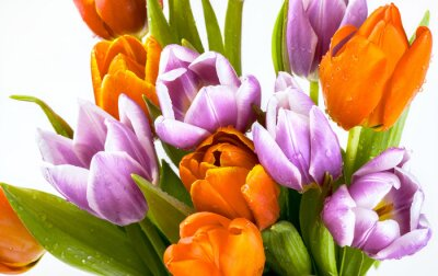 Wall mural Beautiful bouquet of purple and red tulips isolated on white background