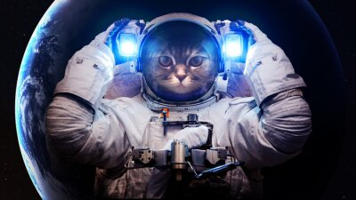 Wall mural Beautiful cat in outer space. Elements of this image furnished by NASA