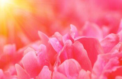 Beautiful flower background