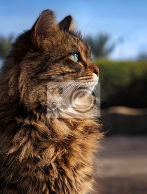 Beautiful fluffy cat in the sunlight