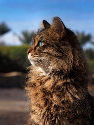 Beautiful fluffy cat looking at the sun