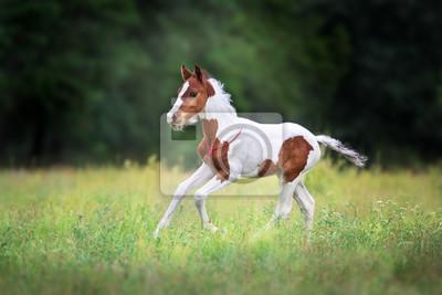 Beautiful foal run