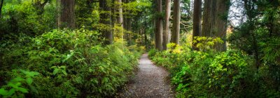 Wall mural Beautiful forest path as panorama background