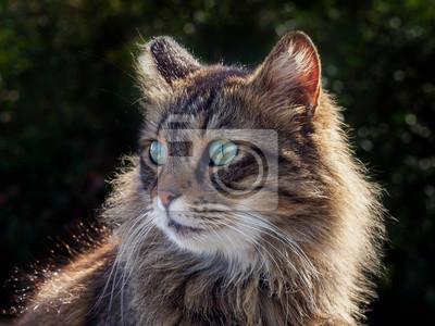 Beautiful furry cat