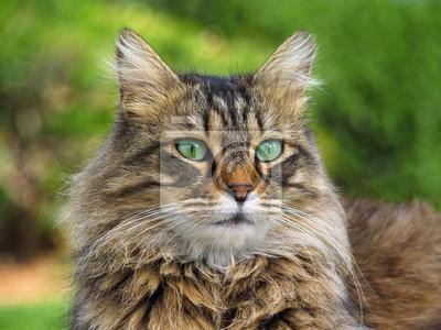 Beautiful furry cat portrait