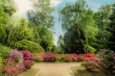 Wall mural Beautiful garden in spring