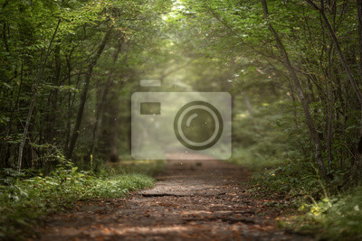 Wall mural Beautiful green summer forest. Spring background, backdrop