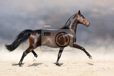 Beautiful horse trotting in sandy field