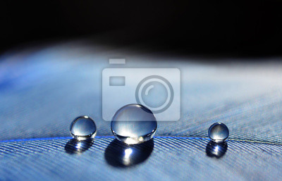 Beautiful large water dew drops on a blue feather close up. Nature background.