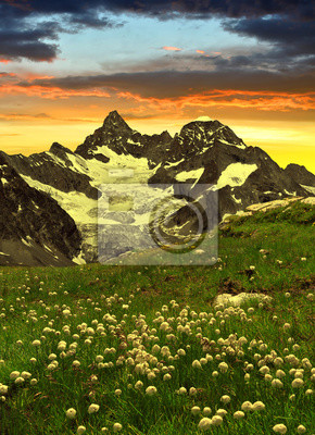 Beautiful mountain Gabelhorn in the foreground blooming cotton grass, Pennine Alps, Switzerland