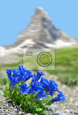 Beautiful mountain Matterhorn with blooming gentian, Pennine Alps, Switzerland.
