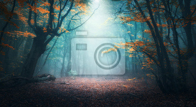 Wall mural Beautiful mystical forest in blue fog in autumn. Colorful landscape with enchanted trees with orange and red leaves. Scenery with path in dreamy foggy forest. Fall colors in october. Nature background