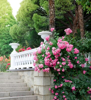 Wall mural Beautiful park with blooming roses