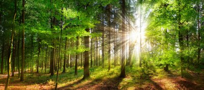 Wall mural Beautiful rays of sunlight in a green forest