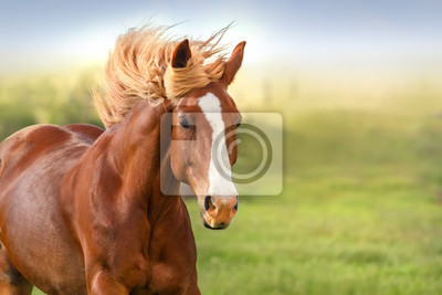 Beautiful red horse with long mane portrait in motion