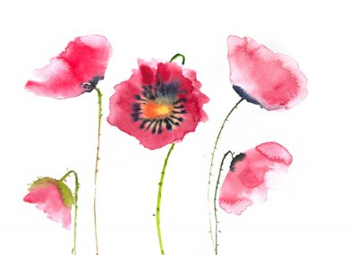 Wall mural Beautiful red poppy flowers, watercolor painting