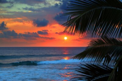 Wall mural beautiful sea sunset and palm leaves