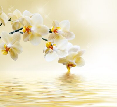 Wall mural Beautiful white orchid