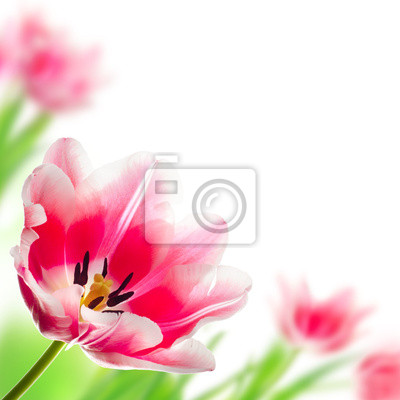 beauty flowers isolated on white