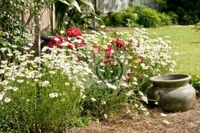 Bed of white shasta daisies