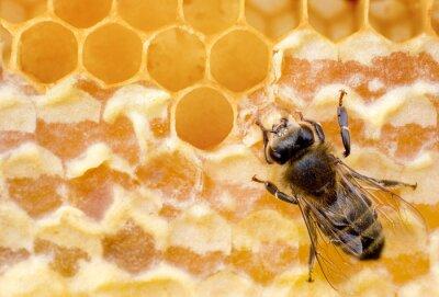 Wall mural bee
