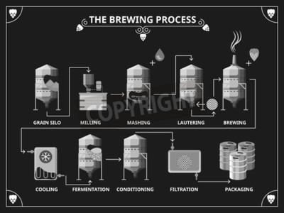Wall mural Beer brewing process. Vector beer production infographic set. Order mashing lautering product illustration