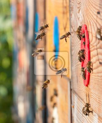 Wall mural bees
