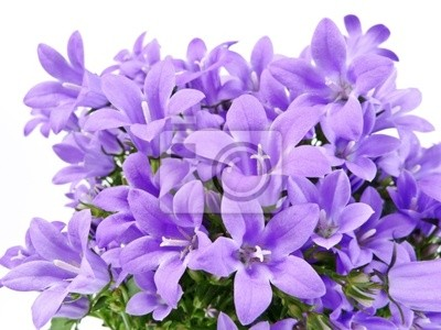 bell flowers isolated