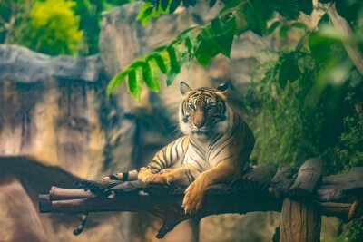 Wall mural bengal tiger resting in forest