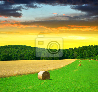 Big hay bale rolls in a lush green field at sunset